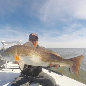Big bull redfish hauled in by @shallowwaterfly