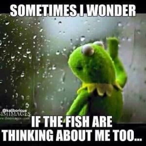 I wonder                                 …