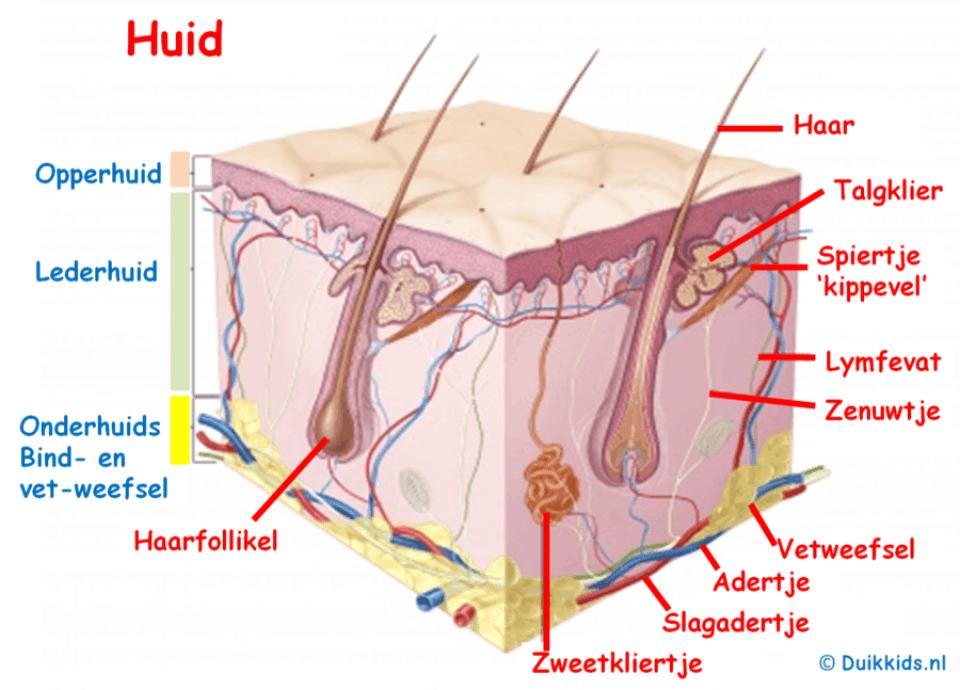 Chemische peeling huidstructuur