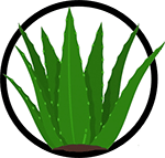 Organic Aloe Vera_Organic Deodorant Ingredients