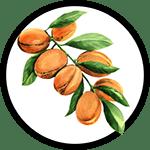 argan-plant_150px-min