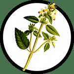 nettles-plant_150-min