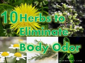 10 Herbal Remedies for Body Odor