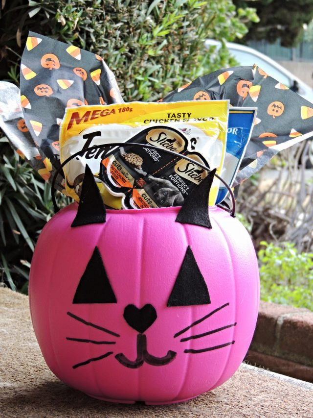 Send a BOO to Your Favorite Cat This Halloween