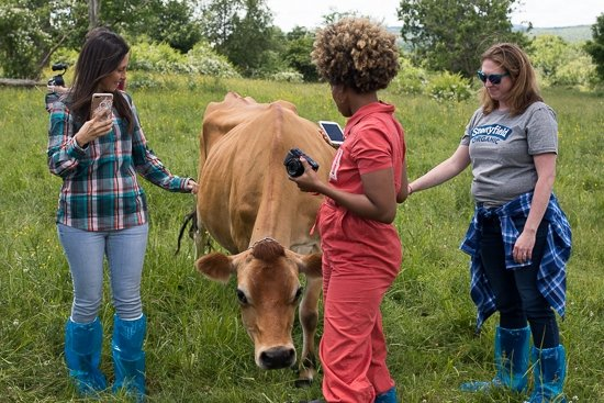 an incredible farm tour in Vermont with the team and co-founder of Stonyfield Yogurt