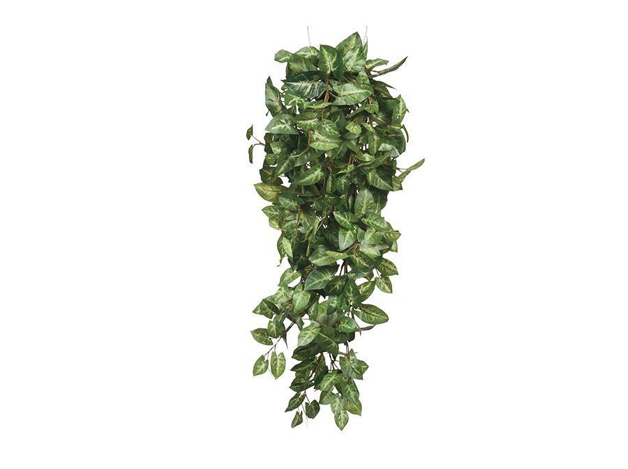 Fittonia hangend – groen