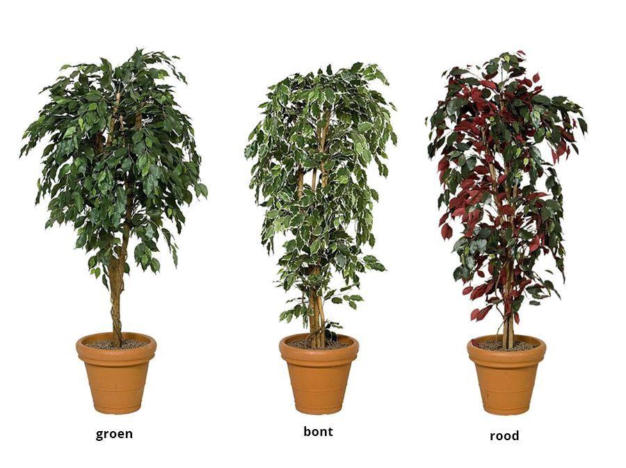 Kunstboom Ficus