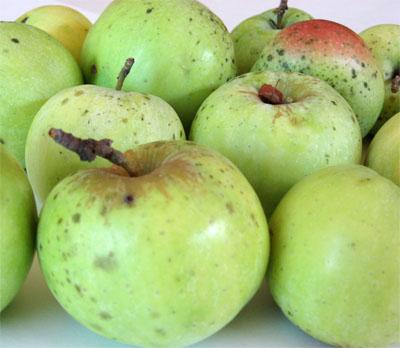 Applepiefilling1