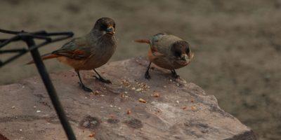 Fåglar vid grillen