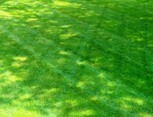 Lawn-LawnCare-Landscape-Maintenance-Grass-Mowing-SKLawnCare3