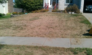Lawn-Lawncare-Grass-verticut-aerate-renovation-restoration2