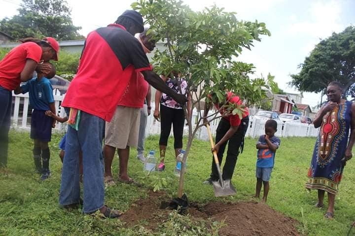 Dr. Drew plants tree