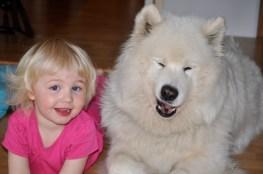 Knashund