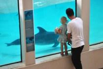 Kul att titta på delfinerna