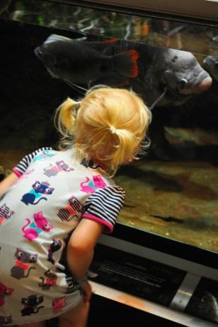 Tuva tittar på fisk