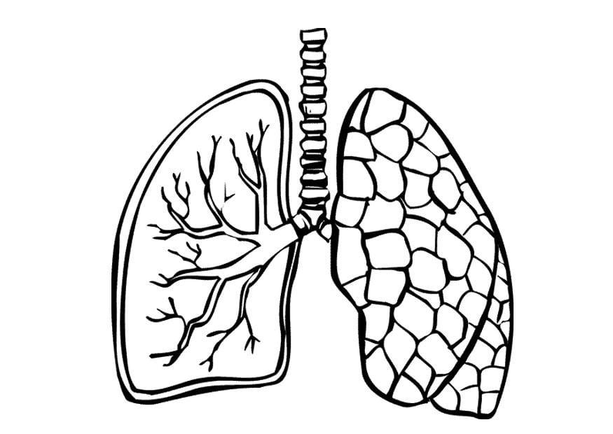 circulatory system heart diagram unlabeled honeywell zone valve wiring målarbild lungor - bild 9488.