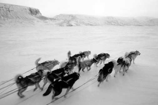 PIC-dogsled