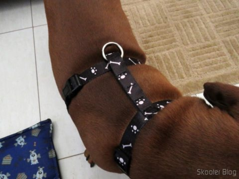 My dog wearing the Breastplate Venice Black for dogs