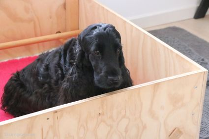 Molli gillar sin låda