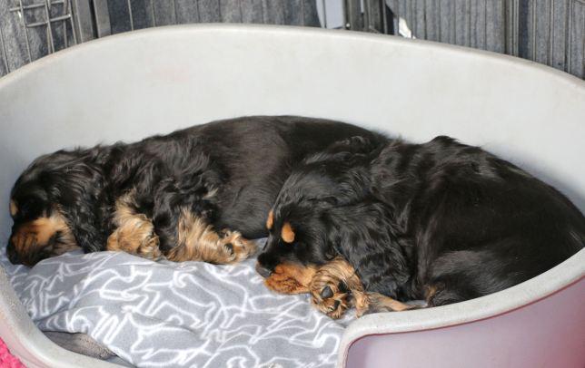 Tello och Tiffany fångade när de sover annars är det full rulle.