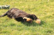 Mysigt med sol, värme och rulla i gräset
