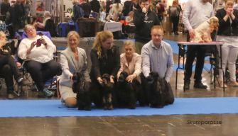 Jag med Cocos, Jessika med Tiffany, Ingela med Ebba och Robert med Keso