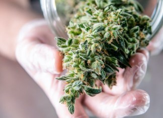 How Long Does it Take for Weed to go Bad?