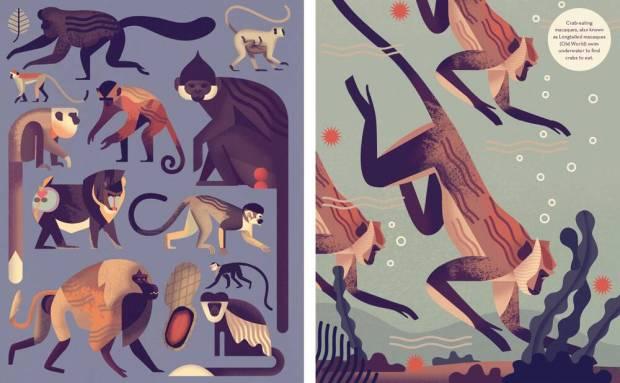 Mad-About-Monkeys-Owen-Davey-Illustration-Combo_1000