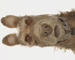 Wes Anderson presents Isle of Dogs footage