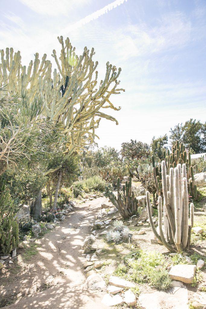 desert cactus botanical garden palos verdes