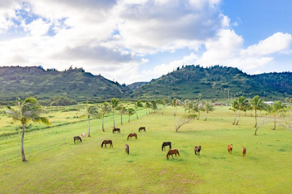 take a selfie with a horse at your wedding kualoa Ranch