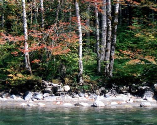 Fall colors Tye River Washington
