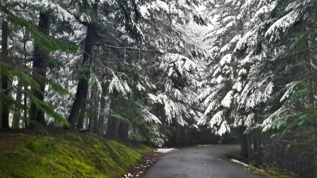 Road to Mt Constitution