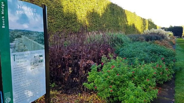 Royal Botanic Gardens Beech Hedge
