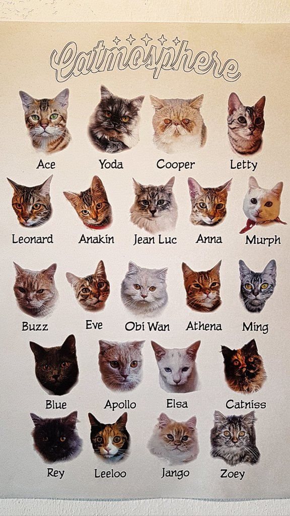 Catmosphere Cats #2