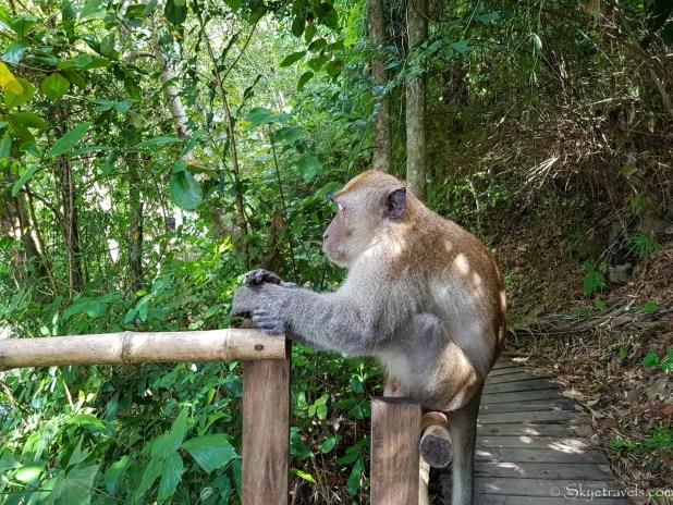 Monkey in Ao Nang Beach
