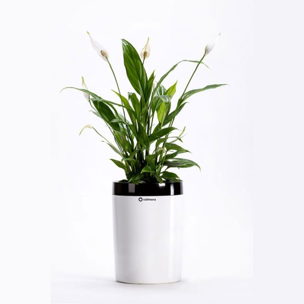 Plastia Calimera B2 Self-watering Plant Pot