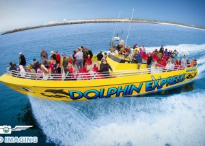 Best Dolphin Tours in Panama City Beach!