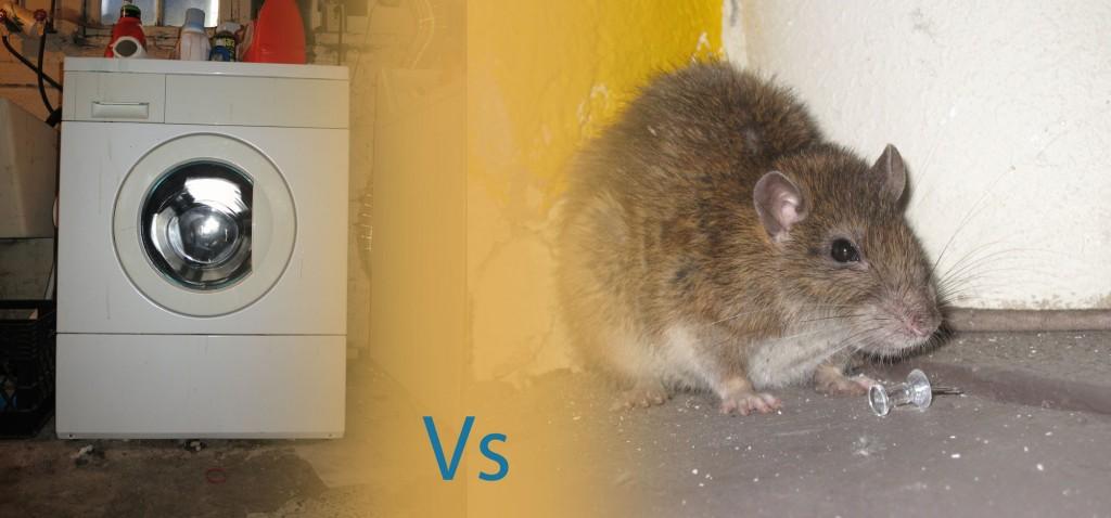 Rat-vs