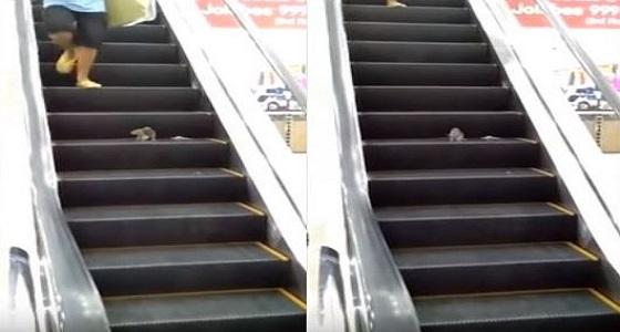 بالفيديو.. فأر يثير الذعر بمركز تجاري