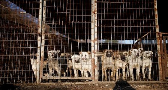 كلاب وقطط الشوارع يضعان موسكو في مأزق