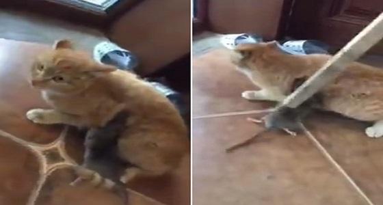 بالفيديو.. فأر يهاجم قطا ويعقره رافضا تركه