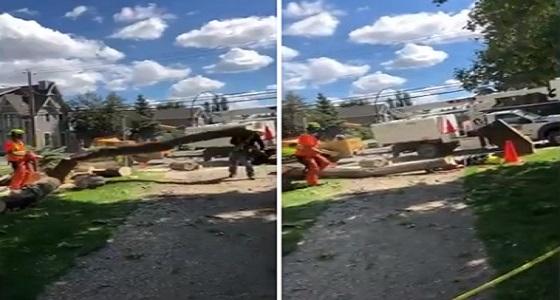 بالفيديو.. لحظة سقوط شجرة فوق رأس رجل أثناء قطعها
