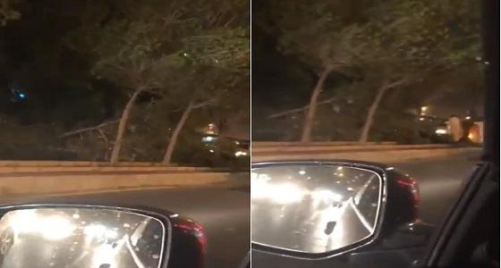 بالفيديو.. تساقط الأشجار بمكة نتيجة شدة الرياح
