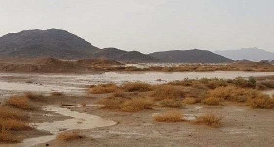بالصور.. أمطار على مراكز الشبحة بمحافظة أملج