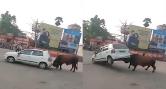 بالفيديو.. ثور هائج يهاجم سيارة ويسقطها
