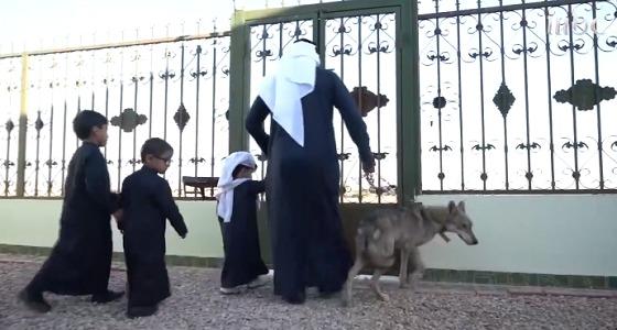 بالفيديو..مواطن وأطفاله يعيشون وسط الذئاب بالجوف