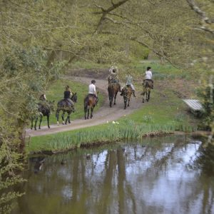 Surrey Horse Riding Stables