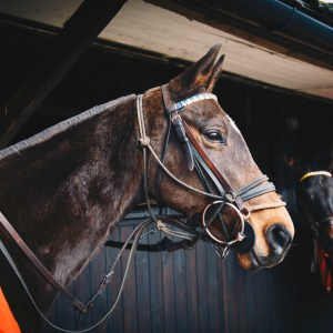 Surrey Riding Stables