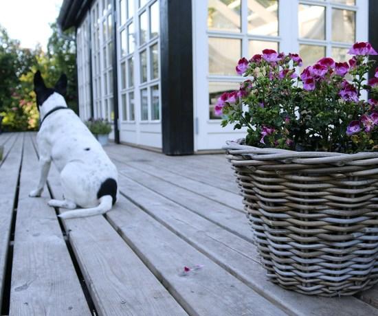 Lørdag i haven på Tjørnevang